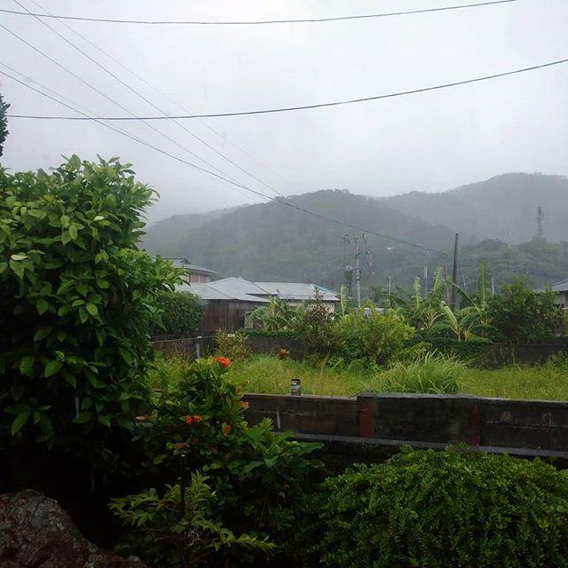 外は雨、風強くとは言っても風速11m,台風にしてはそよ風かな?ばんくん、このうるさい中、お昼寝中いいね